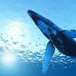 blue_whale 1